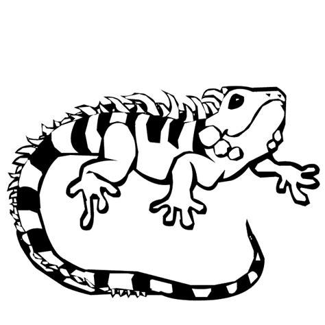 imagenes para pintar iguana dibujos de iguanas para colorear y pintar