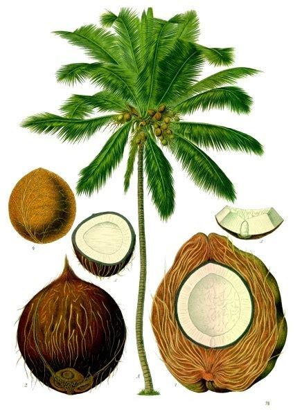 kokosnuss le instagloss coconuts