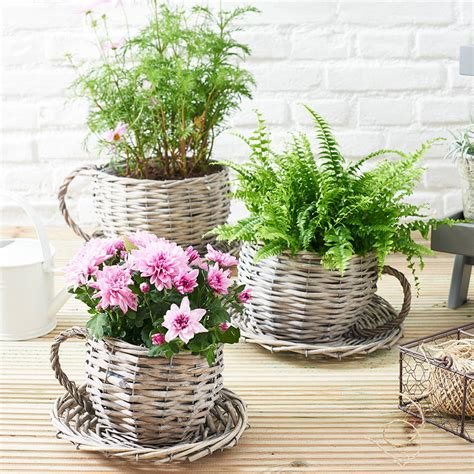 Unique Planters For Sale by Willow Teacup Planter Gardening Gift By Ella Notonthehighstreet