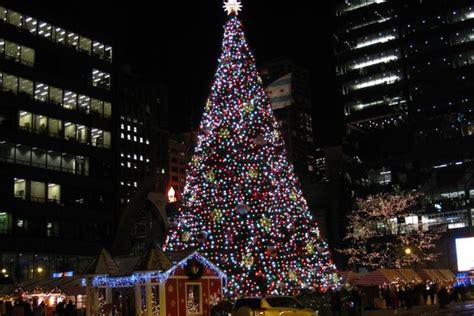 chicago christmas tree gets new home at millennium park