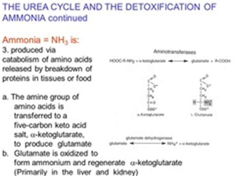How To Detox Ammonia From Brain by Ms1 B3w2l5 Dr Howard Liver Detoxification Of Ammonia And