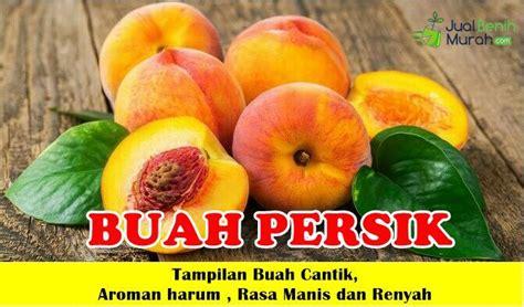Bibit Tanaman Buah Persik bibit buah persik 70cm jualbenihmurah