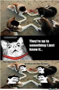 Dog Logic Meme - cat logic vs dog logic by unciunator meme center