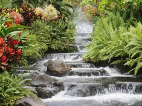 beautiful amazing waterfall flowers from japan hd