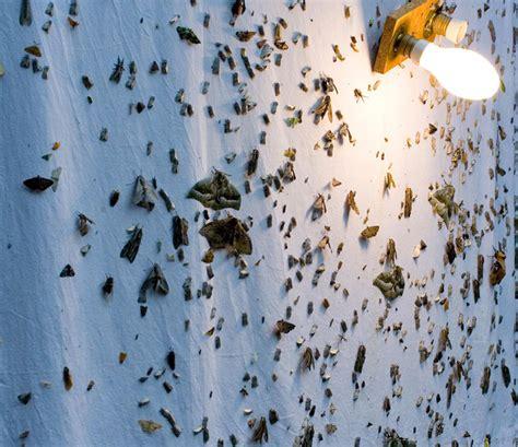 Do Led Light Bulbs Attract Bugs Do Led Light Bulbs Attract Bugs Frys Feit Www Hempzen Info