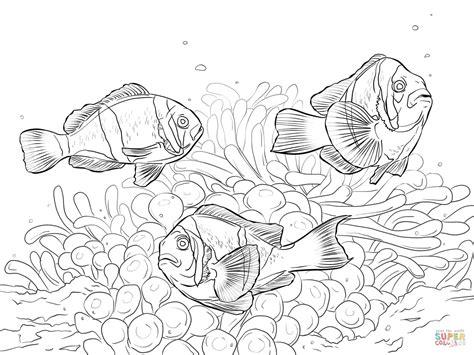 yellow tang coloring page desenho de peixe palha 231 o de allard para colorir desenhos