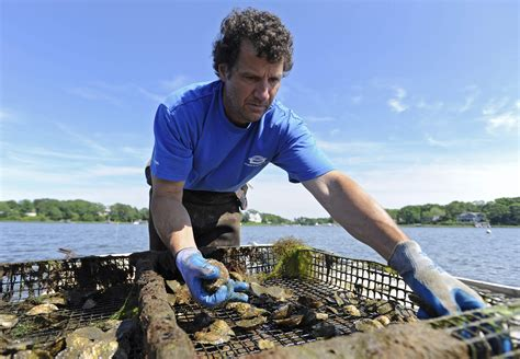 cape cod court reports appeals court ruling favors mashpee oyster farmer news