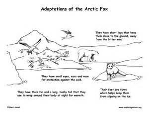 the arctic fox environmental adaptations