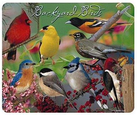 backyard wild birds backyard birds jigsaw puzzle 2015 best auto reviews