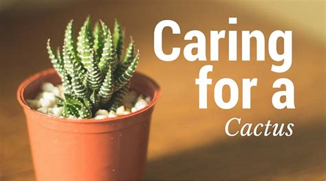unusual indoor plants caring for a cactus nourish the
