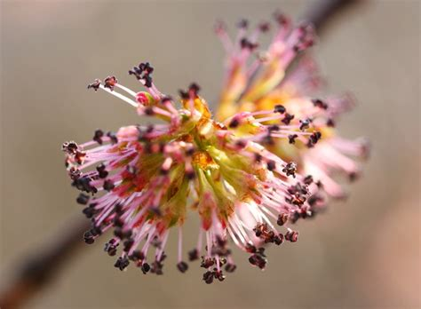 fiori di bach elm elm bach flower remedy hibler bach flower
