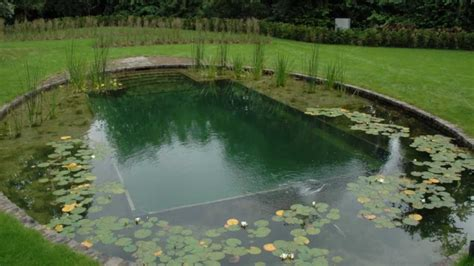 natural swimming pool natural swimming pools youtube