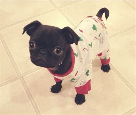 pug onesie 30 animals in onesies