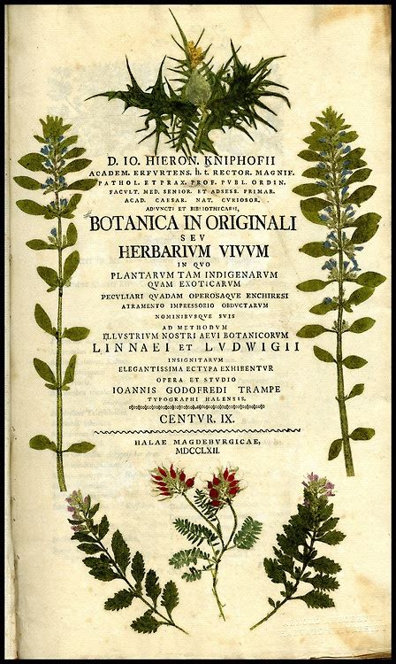 classic sketchbook botanicals secrets 1631591398 17 best images about vintage botanical on antiques vienna and indian flowers