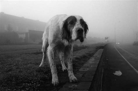 abandoned dogs a dog is for life not just for christmas