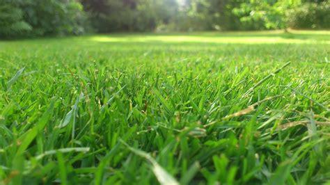 eingangstüren größe grasgoed gemaaid gras krijgt een tweede leven als paaltje