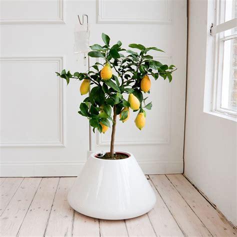 pianta per interni piante di casa piante da interno pianta da appartamento