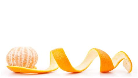 can dogs eat orange peels can dogs eat oranges can oranges be risky for dogs
