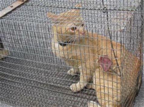 gabbia cattura gatti gabbia trappola gatti prezzo home visualizza idee immagine