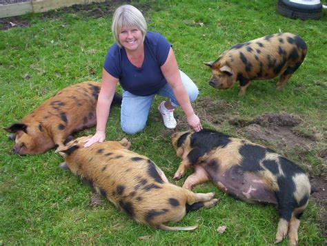 the healing garden centre reiki readings courses and healing kune kune pigs