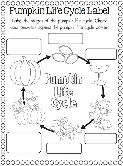 coloring pages of life cycle of pumpkin 288 best pumpkins images on pinterest halloween