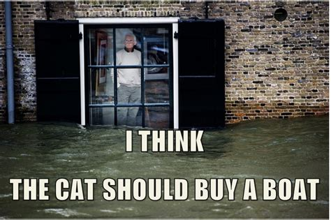 I Should Buy A Boat Meme - that cat should buy a boat i should buy a boat cat