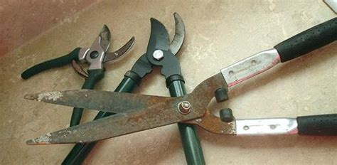 how to sharpen and care for your kitchen knives how to sharpen pruning tools today s homeowner