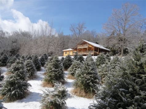 10 tennessee tree farms to visit this winter