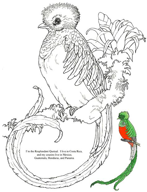 guatemala bird coloring page coloring pages