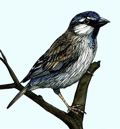 bird art drawing birds 1782212965 small bird drawing pen and ink watercolour watercolor ink birds small birds