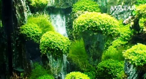 aquarium design waterfall avatar landscaping aquarium with underwater waterfalls