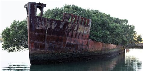 abandoned boats for sale australia 102 year old abandoned ship is a floating forest my