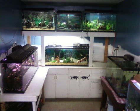 room fish cichlids tank exles the fish room