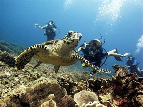 gili trawangan dive diversia diving gili trawangan indonesia hours