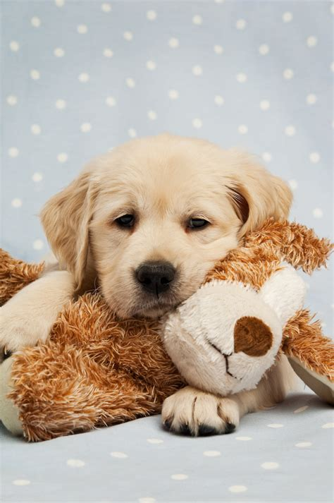 how much do puppies sleep at 10 weeks ww 10 reasons to think about a new puppy no ordinary homestead