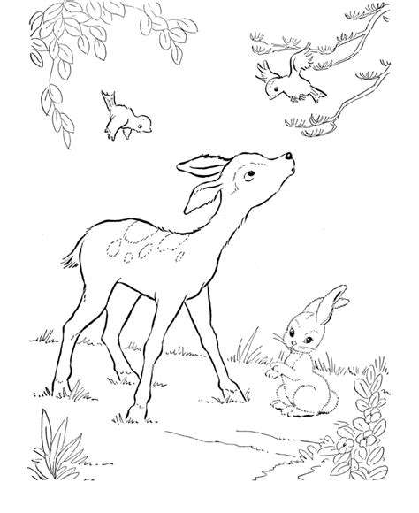 white tail dear coloring pages