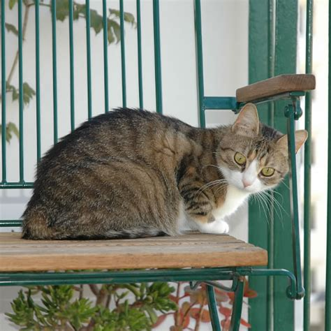 gatos en casa tener gato en casa salud de gatos mundo animal