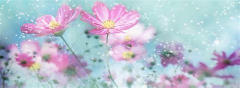 imagenes de flores bonitas para portada portadas para facebook de flores portadas para facebook