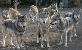 Lessons from the wolf pack 12 dealing with receptionists