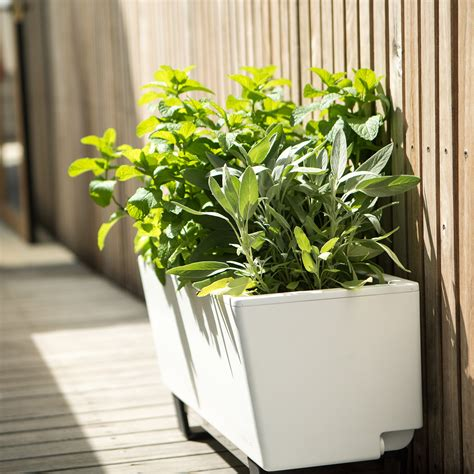 mini bench mini bench planter glowpear touch of modern