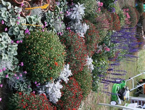 di masino fiori immagini della mostra di masino autunno 2009 fiori e foglie