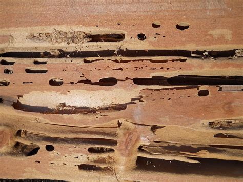 wood destroying insect certification wood destroying insects joseph engineering