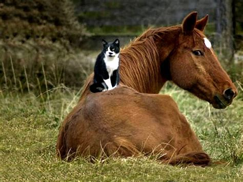 Rocky Pet Barn Reblogged John S Blog