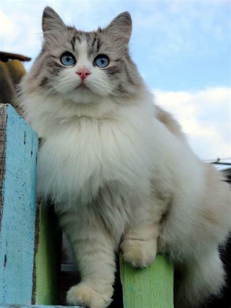 imagenes tumblr gatitos 10 cuentas de gatitos que deber 237 as seguir en tumblr e