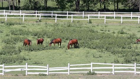 horse corral stock photos horse corral stock images alamy horses in corral on farm stock footage video 4367729
