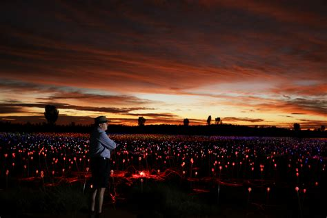Field Of Light by Spectacular Field Of Light Installation Comes To Uluru