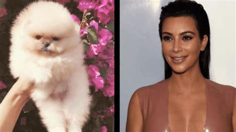 kim kardashian baby name options kim kardashian asked twitter if she should name her puppy