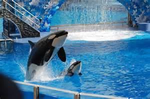 Sea World Seaworld Shamu Show Photo Page Everystockphoto