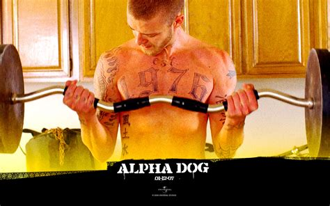 alpha dogs alpha images alpha hd wallpaper and background photos 27276408