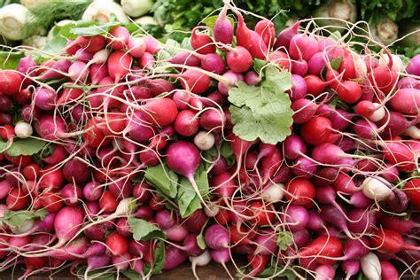 Bibit Benih Seed Sayur Lobak Radish Home Growing Vegetables beberapa contoh desain taman sayuran terbaru biyanbbs